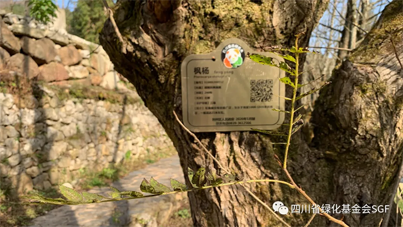 社会参与,对70868株树的关爱插图(5)